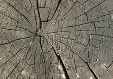 Cracked old wood stump Royalty Free Stock Photo