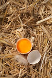 Cracked open hens egg on straw Stock Photography