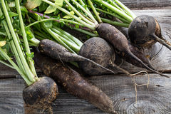 Cracked organic round and long black radishes with fresh green tops Stock Images