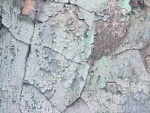 Cracked paint on the wall of old abandoned house royalty free stock photos