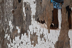 Cracked Paint on Weathered Wood Stock Image