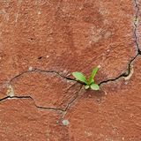 Cracked painted wall fragment Royalty Free Stock Images