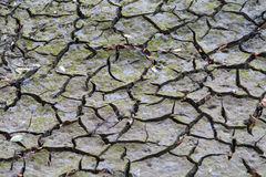 Cracked, parched land after a drought Royalty Free Stock Photography