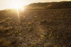 Cracked, parched land after a long dry season. At sunset Royalty Free Stock Images