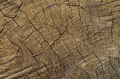 Cracked Pattern of Log Royalty Free Stock Photo