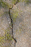 Cracked Pavement Stock Photo