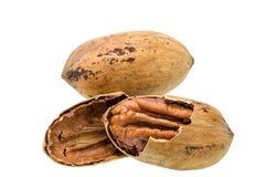 Cracked pecan nut isolated on white background,macro shot. Cracked pecan macro shot on white background Stock Photography