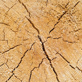 Cracked pine-tree trunk in cross section Royalty Free Stock Photography