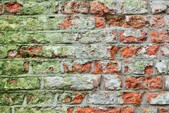 Cracked red brick wall with green microscopic plants Stock Image
