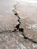 Cracked road with new life Stock Photos
