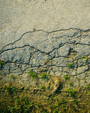 Cracked road texture Stock Image