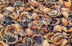 Cracked rotten nuts infected with mold Royalty Free Stock Image