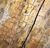 Cracked rotten wood Royalty Free Stock Photos