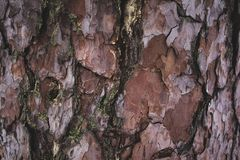 Free Cracked Rough Brown And Purple Tree Bark Background Stock Photo - 119826130