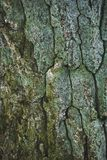 cracked rough green tree bark background stock photos