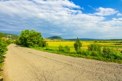 Cracked rural road near field with sunflower royalty free stock photo