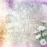 A cracked rusty metal wall with beautiful bunch of daisy Royalty Free Stock Images