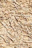 cracked sand in morocco africa  macro hay Stock Image
