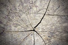 Cracked section of tree trunk Stock Images