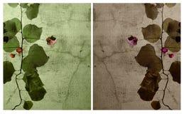 cracked set vägg för bakgrund bougainvillea Royaltyfria Foton