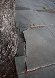 Cracked sidewalk. By a tree Royalty Free Stock Image