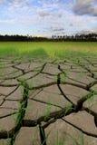 Cracked smutsar i en torkad paddy sätter in Arkivbild
