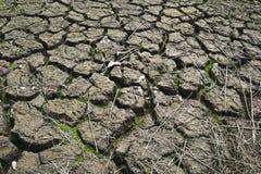 Cracked soil Stock Photos