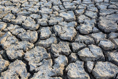Cracked soil background. Of the field in Thailand Stock Image