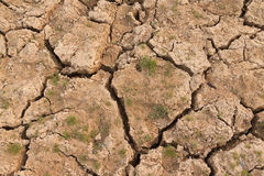 Cracked soil Stock Images