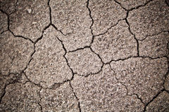 Cracked Soil Closed-up Stock Image