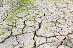 Cracked soil . Stock Photo