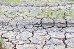 Cracked soil. Royalty Free Stock Image