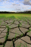 Cracked soil in a dried paddy field Stock Photography