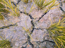 Cracked soil in a dried paddy field. Cause by global warming. Soft Focus Royalty Free Stock Photo