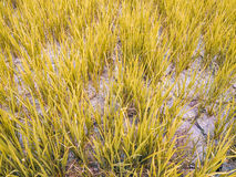 Cracked soil in a dried paddy field. Cause by global warming. Soft Focus Royalty Free Stock Photos