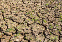 Cracked soil during drought. Stock Image