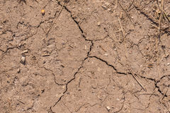Cracked soil of dry corn field Stock Image