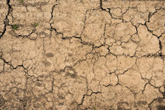 Cracked soil dry earth texture Stock Photos