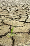 Cracked soil and grass Stock Image