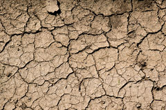 Cracked soil texture royalty free stock images