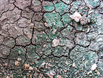 Cracked Soil Texture and Some Lichen   Royalty Free Stock Photos
