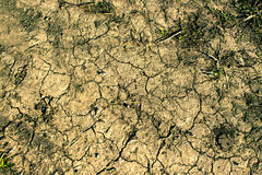 Cracked Soil Texture. In the sun light with few grass tufts on it in drought period Stock Photo