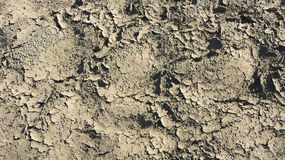 Cracked surface of the earth. The result of drought on the soil Royalty Free Stock Photo