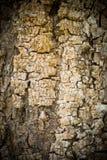 Cracked texture wood Stock Photos