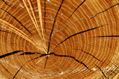 Cracked timber Royalty Free Stock Images