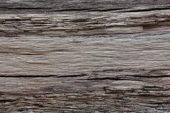 Cracked tree bark texture Royalty Free Stock Photography