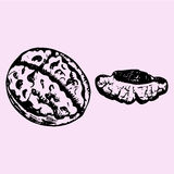 Cracked walnut, half walnut Royalty Free Stock Images
