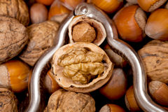 Cracked walnut and hazelnut inside of a silver nutcracker Stock Photography