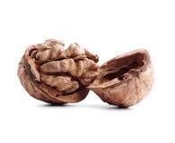 Cracked walnut isolated on white Stock Photo