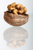 Cracked walnut with reflection Stock Images